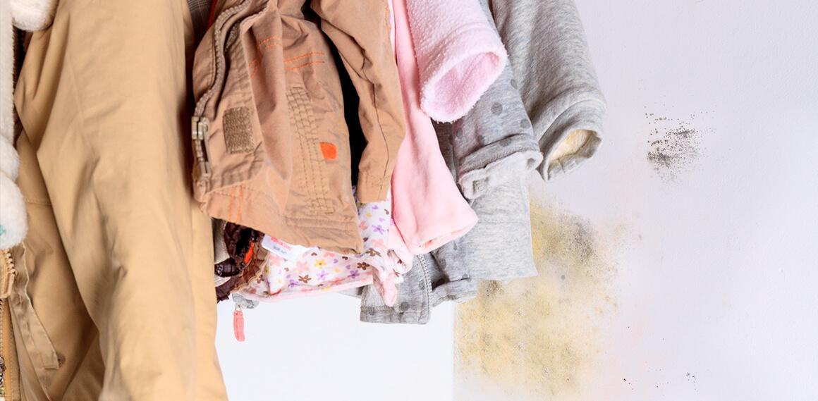 Mofo no guarda-roupa: livre-se dele e aprenda a evitar